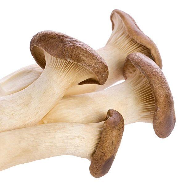 King oyster - Pleurotus eryngii - spawn dowels for organic growing acc. to Regulation EC 834/2007 and 889/2008, AT-BIO-701, Strain Nr.: 101002