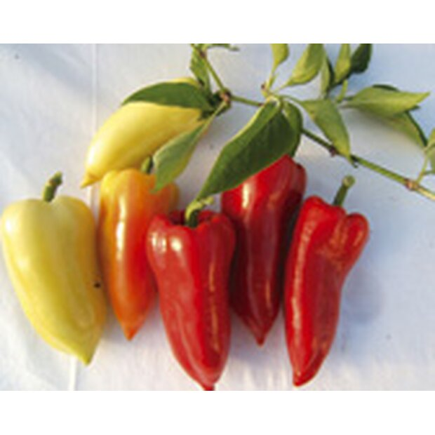 Sweet Pepper Ferenc Tender Seeds from Organic Farming