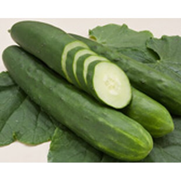 Cucumber Tanja Seeds from Organic Farming