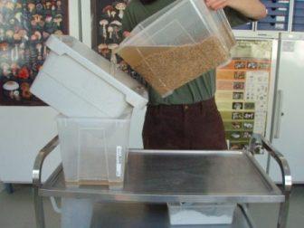 Sterilizing rye substrate for grain spawn - Tyroler Glückspilze